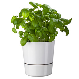 pot hydro